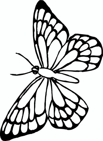 Pin By Foster Ginger On Coloring Book Butterfly Papillon