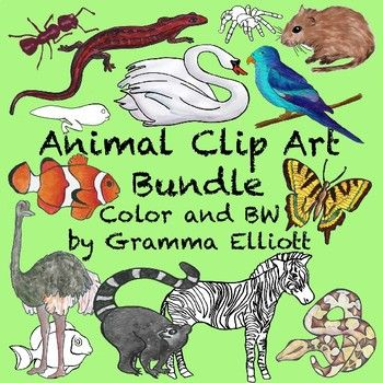 Animal Clip Art Large Bundle Containing 130 Animals In Colors And Black Line Clip Art From Animal Packages Mammals Amph Art Bundle Clip Art Animal Clip Art