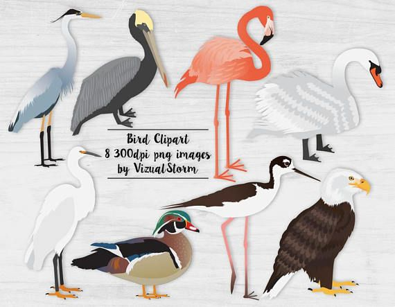 Egret Cartoons: Water Birds Clipart Hand Drawn Eagle Swan Pelican Pink