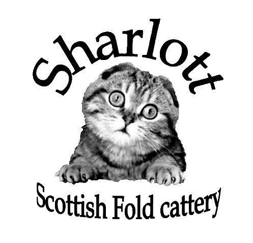 Sharlott Cattery Scottish Fold Kittens For Sale In Ny Scottish Fold Scottish Fold Kittens Cattery