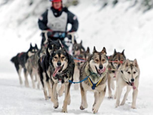 Extreme Alaska Dog Training Dogs Dog Minding