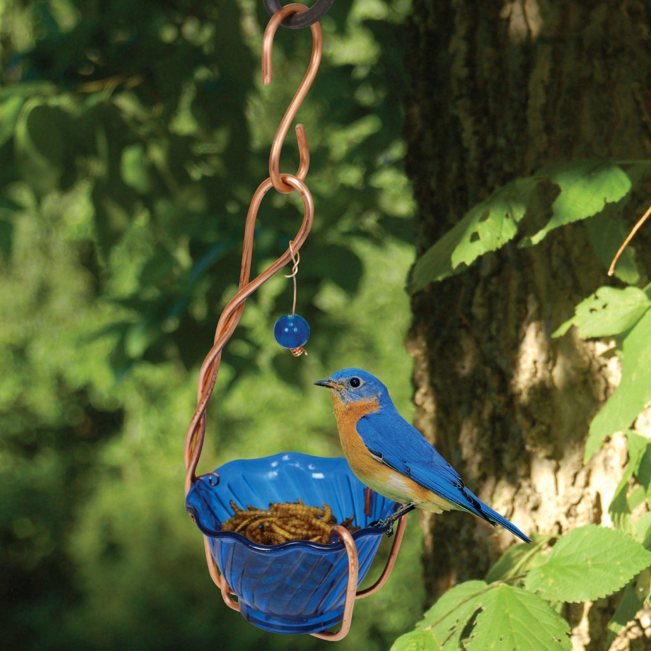 Jelly or meal worm feeder bird houses bird feeders