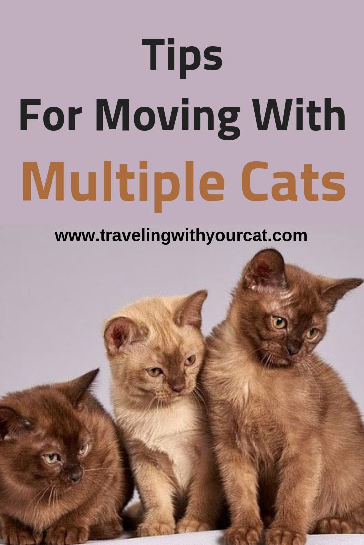 Tips For Moving With Multiple Cats Travelingwithcats Catcare