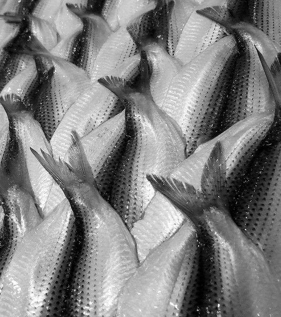 tsukiji fish market by roncierge, via Flickr
