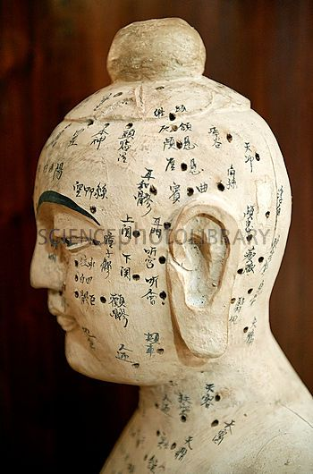 Ancient Chinese Medicine Chinese Acupuncture Model Stock Image C010 4006 Enlarged Science Acupuncture Chinese Medicine Traditional Chinese Medicine