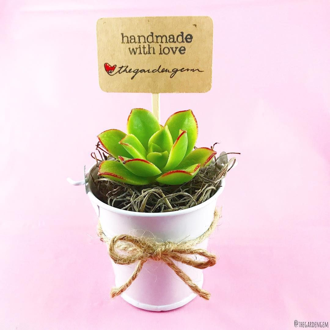 Kiwi succulent plant wedding favor | Handmade Favors | Pinterest ...