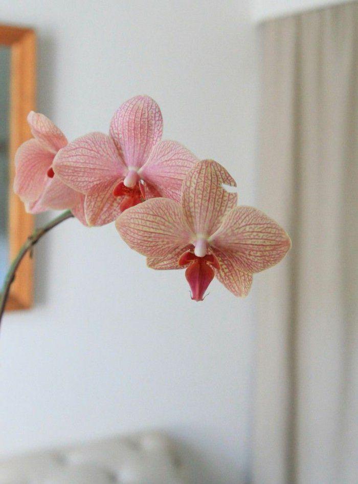 Tipps Zur Orchidee Pflege - Wie überdauert Die Orchidee Länger ... Blumen Tipps Pflege Von Zimmerpflanzen