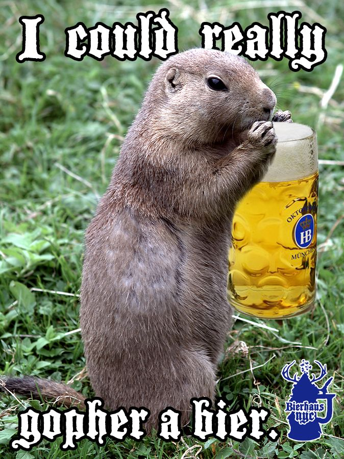 56c77a96d020534bf45e892c57e58452 i could really gopher a bier beer meme mmmm beer pinterest