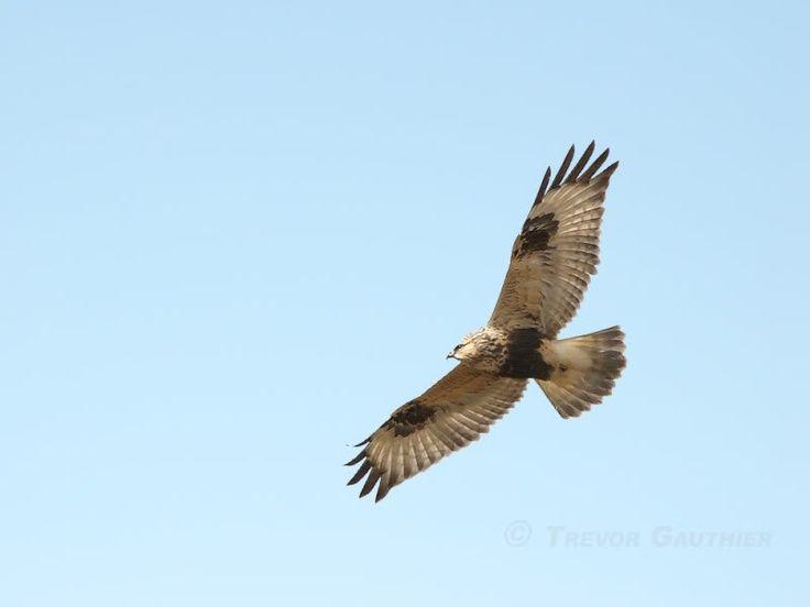 Louisiana Birds Of Prey Identification Visit Bing Com Birds Of Prey Bird Birds