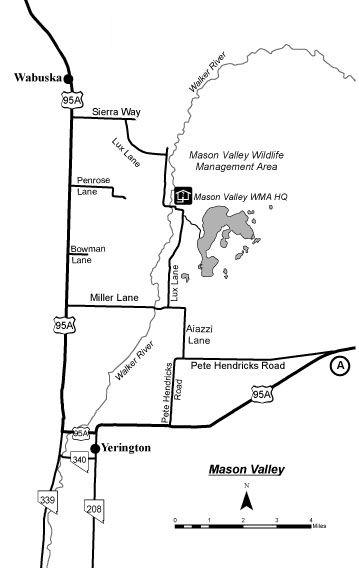 mason valley wildlife management area map - Google Search   States on alamo nv map, winnemucca nv map, california nv map, summerlin south nv map, mound house nv map, vya nv map, needles nv map, las vegas nv map, stead nv map, silver peak nv map, gardnerville nv map, mason valley nv map, coyote springs nv map, st. george nv map, reno nv map, panaca nv map, valley of fire nv map, kingston nv map, duckwater nv map, pahrump nv map,
