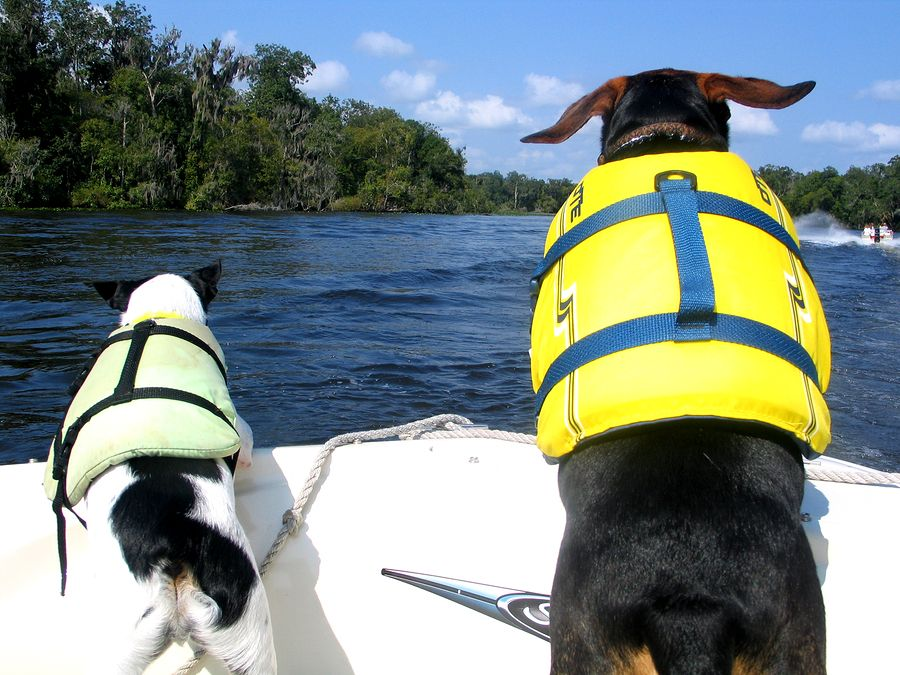 Do your pets enjoy heading out in the boat, too? Ask us