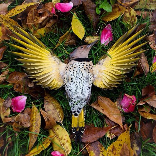 Corpse Enthusiast Exquisite Corpse Corpse Bird