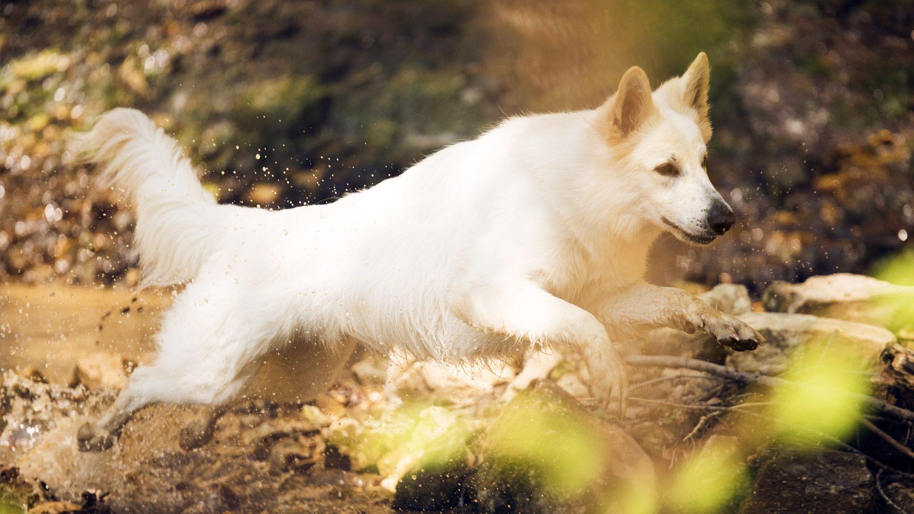 Pin Von Taraka Kamble Auf Funny Animals Pferde Fotografie Pferdefotografie Hunde