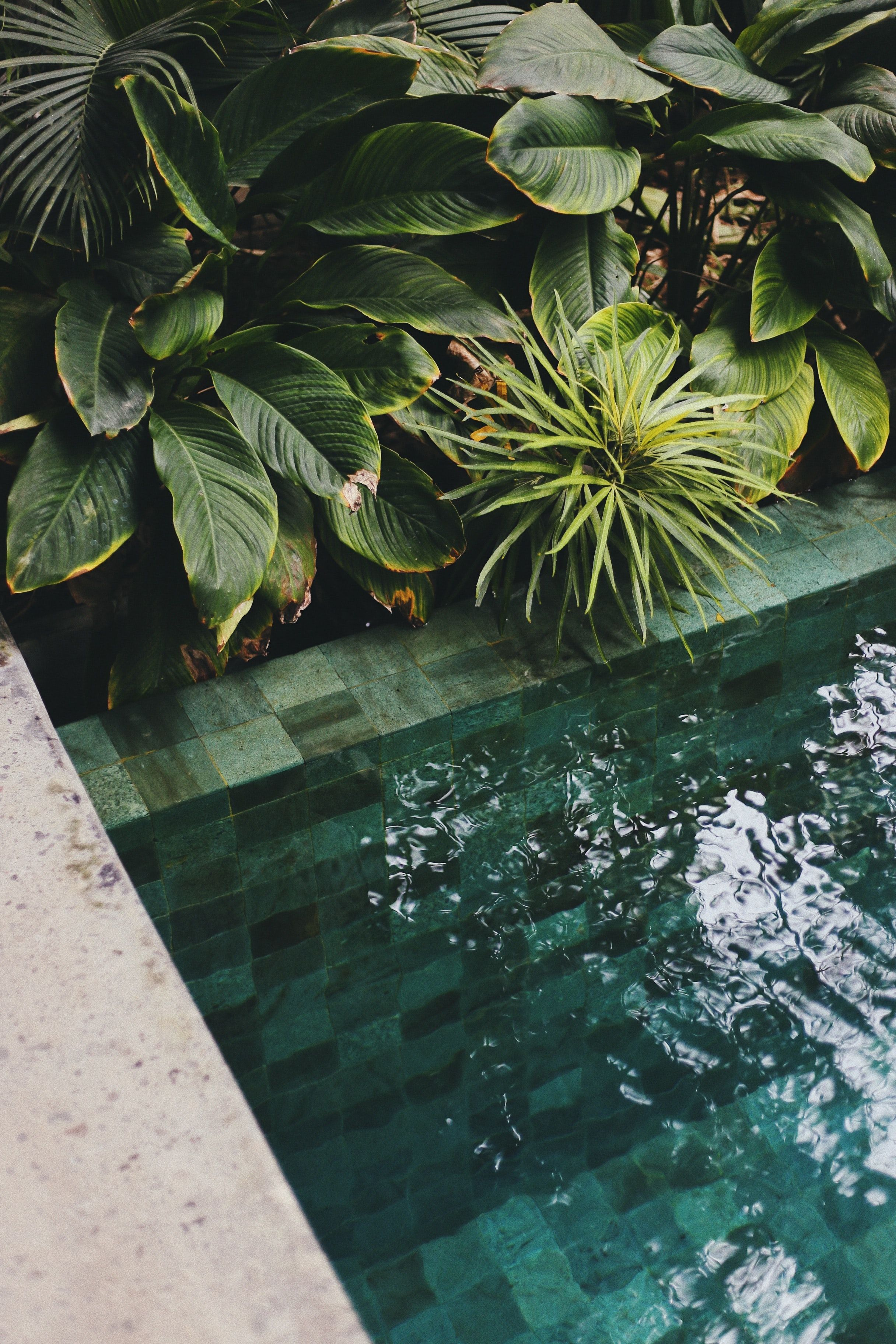 greenleafed plant (с изображениями) Растения, Бали