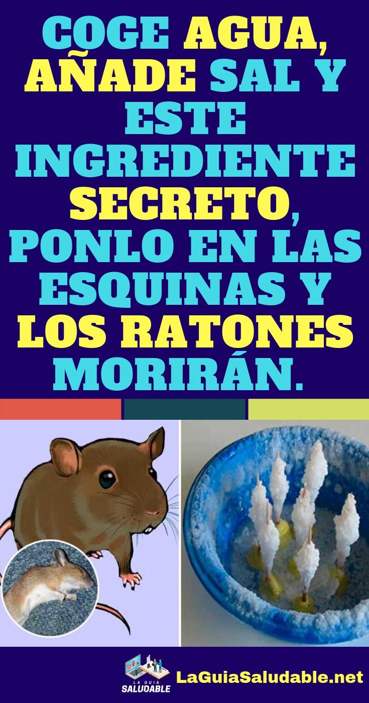 Como Acabar Con Las Ratas En El Campo Coge Agua Anade Sal Y Este Ingrediente Secreto Ponlo En Las