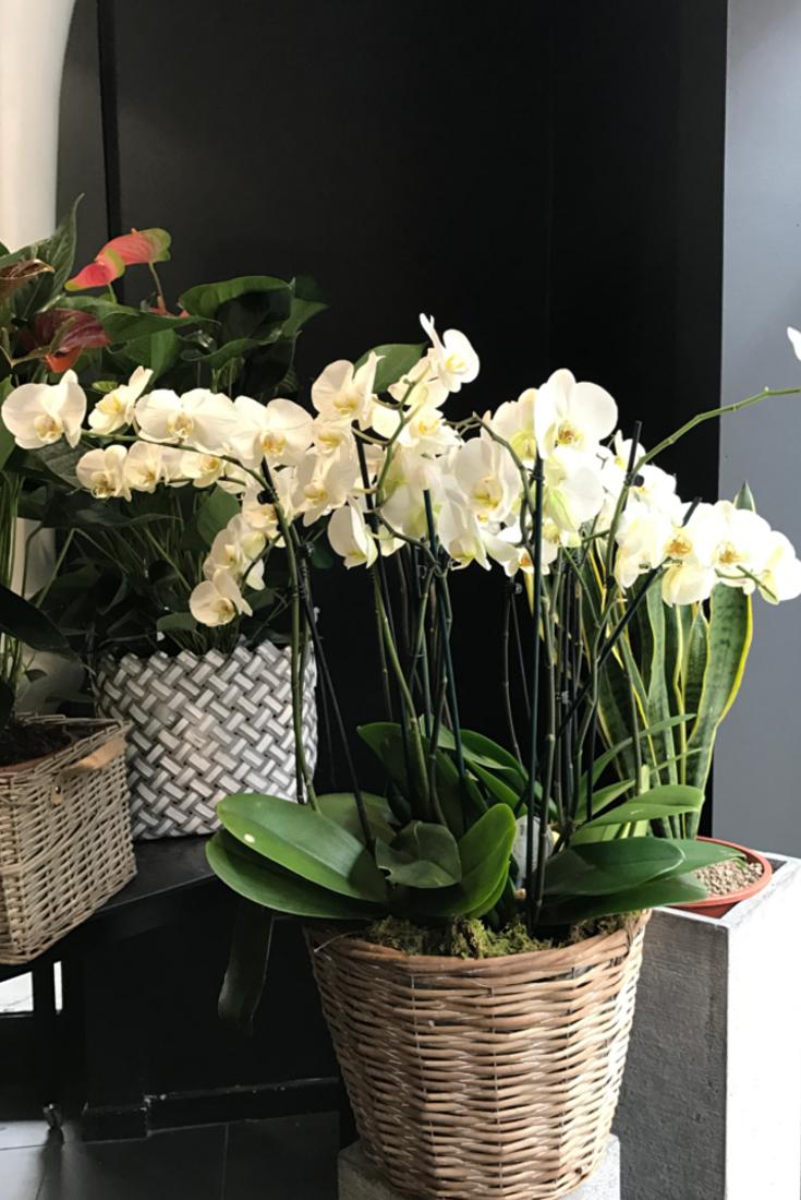 Una meravigliosa orchidea in vaso complementi d 39 arredo - Vasi per orchidee ...