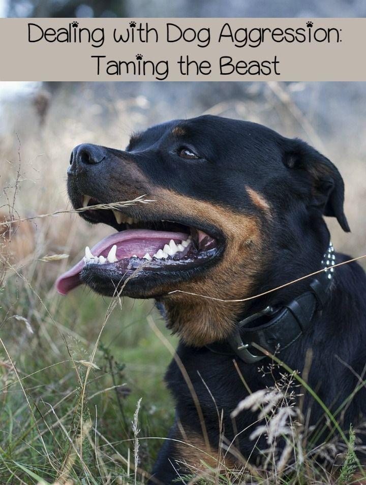 Dog Aggression Taming The Beast Aggressive Dog Dog Behavior