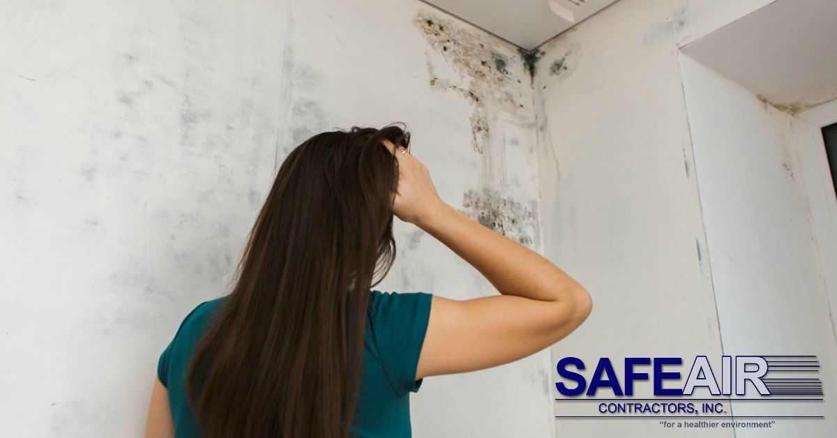 Why Ohio Black Mold Removal is Crucial to Your Health # ...