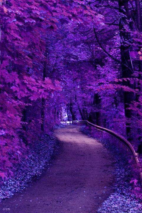 A Walk Through The Purple Path Beautiful Nature Beautiful Landscapes Beautiful Tree