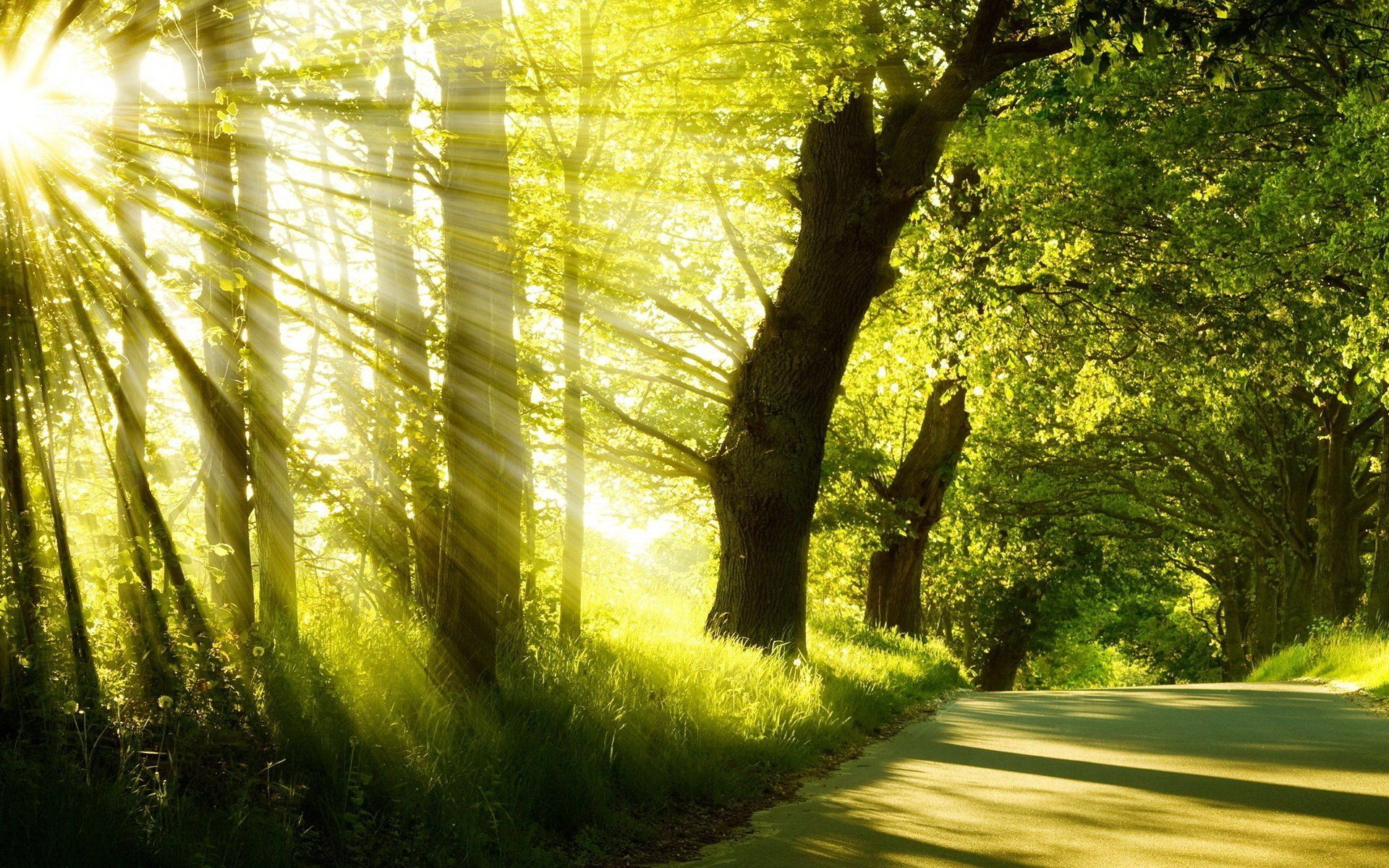 summer park road tree grass morning sunrise fog sun rays hd