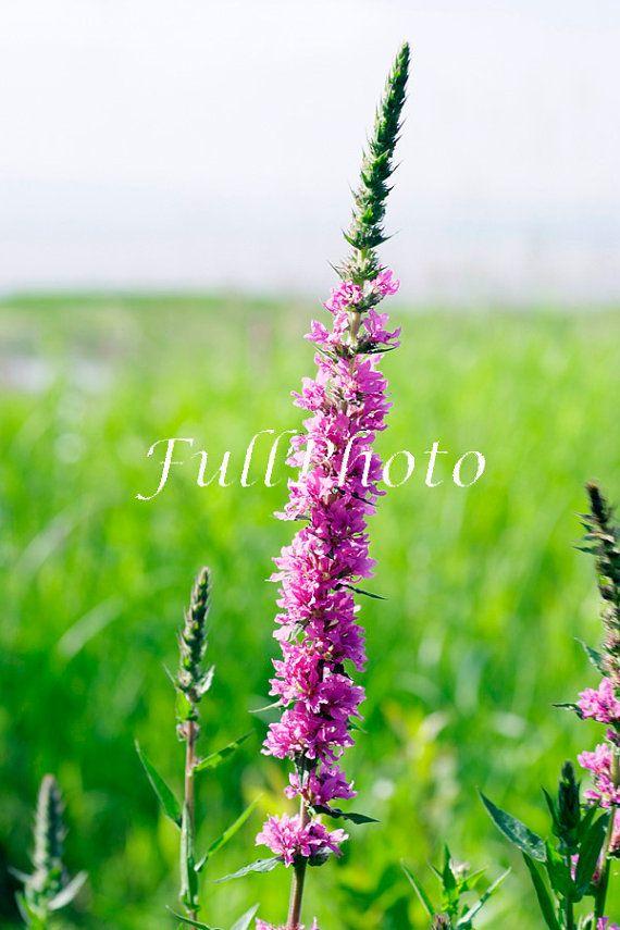 photographie de fleur - décor rose fuchsia et vert - photo image