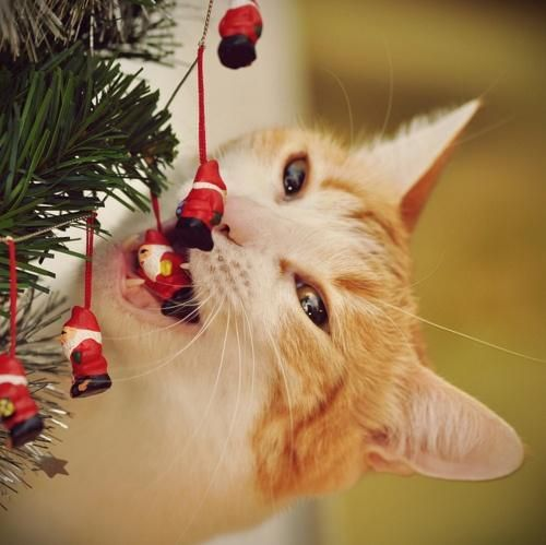 O Christmas Tree O Christmas Tree Your Ornaments Are History This Looks Familiar Christmas Cats Christmas Animals I Love Cats
