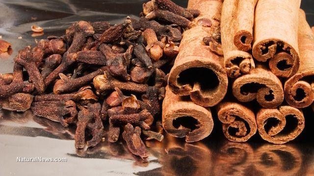 Cinnamon bark, used in Chinese medicine, shown to halt progression of Parkinson's