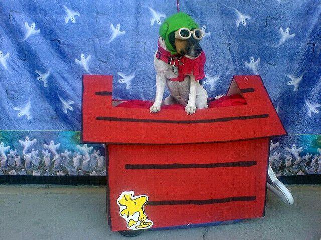 World War I Flying Ace Dog Halloween Costumes Dog Costumes Dog