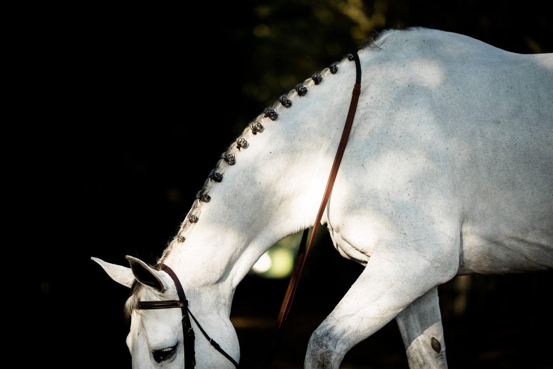 Nicole Schultz Grey Horse Beautiful Horses Horse Rider