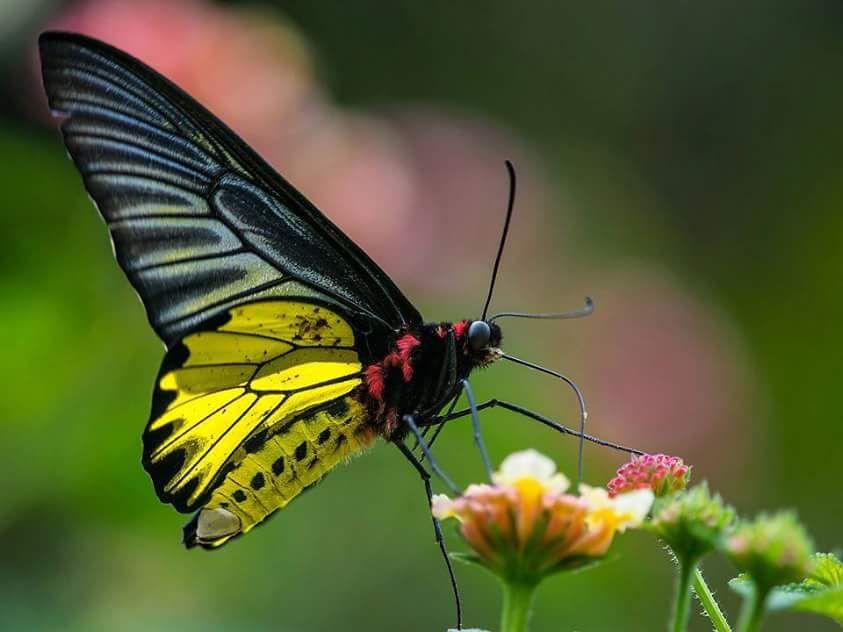 Mariposa 蝶