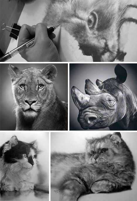 Various Graphite Drawings By Paul Lung Showing Outstanding