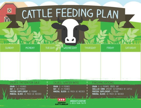 4 Tips For Developing A Solid Cattle Feed Plan - From the Ground Up