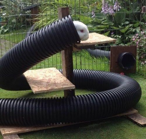 Plastic Pipe Rabbit Tunnel - petdiys.com