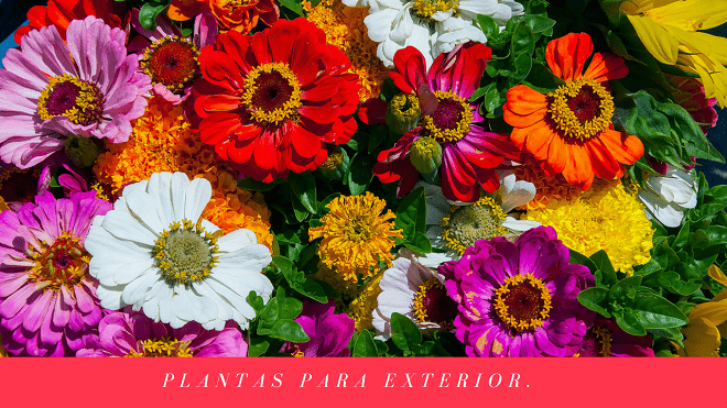 Conoce Las Variedades Y Tipos De Plantas Para Exterior Nombres De - Nombres-de-plantas-de-exterior