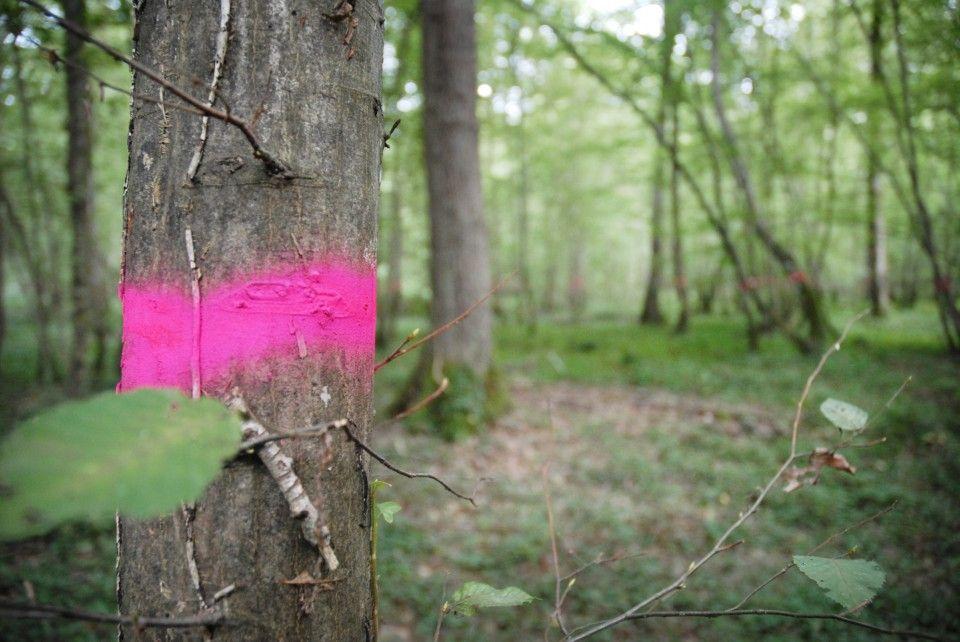 Un arbre marqué d'un trait rose
