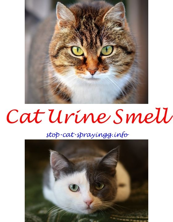 cat urine smell in carpet