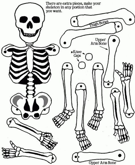 Esqueleto Humano Para Imprimir Y Armar Articulado Imagui Skeleton Craft Halloween Crafts Cool Coloring Pages