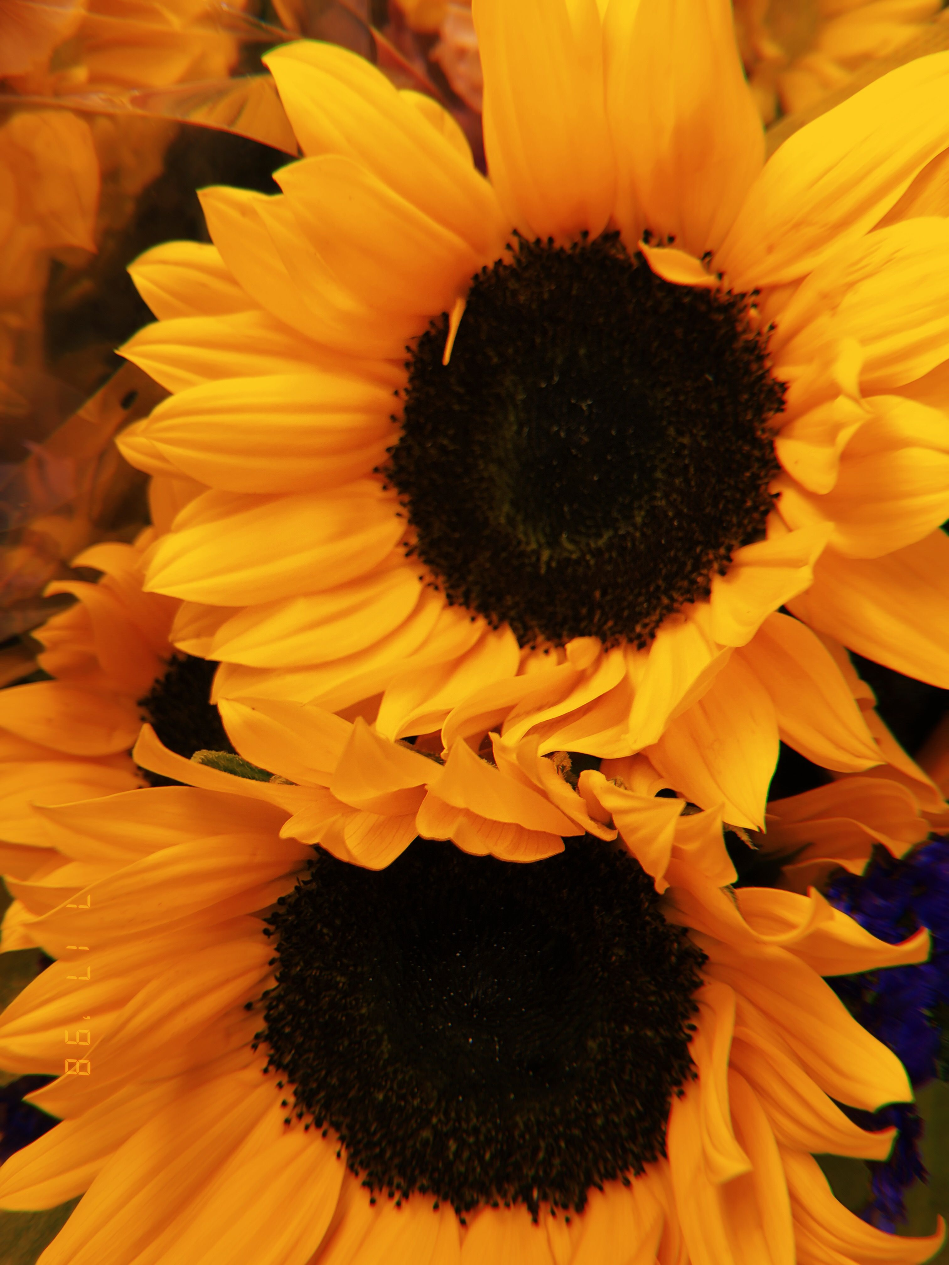 Sunflower Flower Yellow Aesthetic 新垣結衣 ショートボブ Anime Yellow Aesthetic Yellow Flowers Sunflower Pictures
