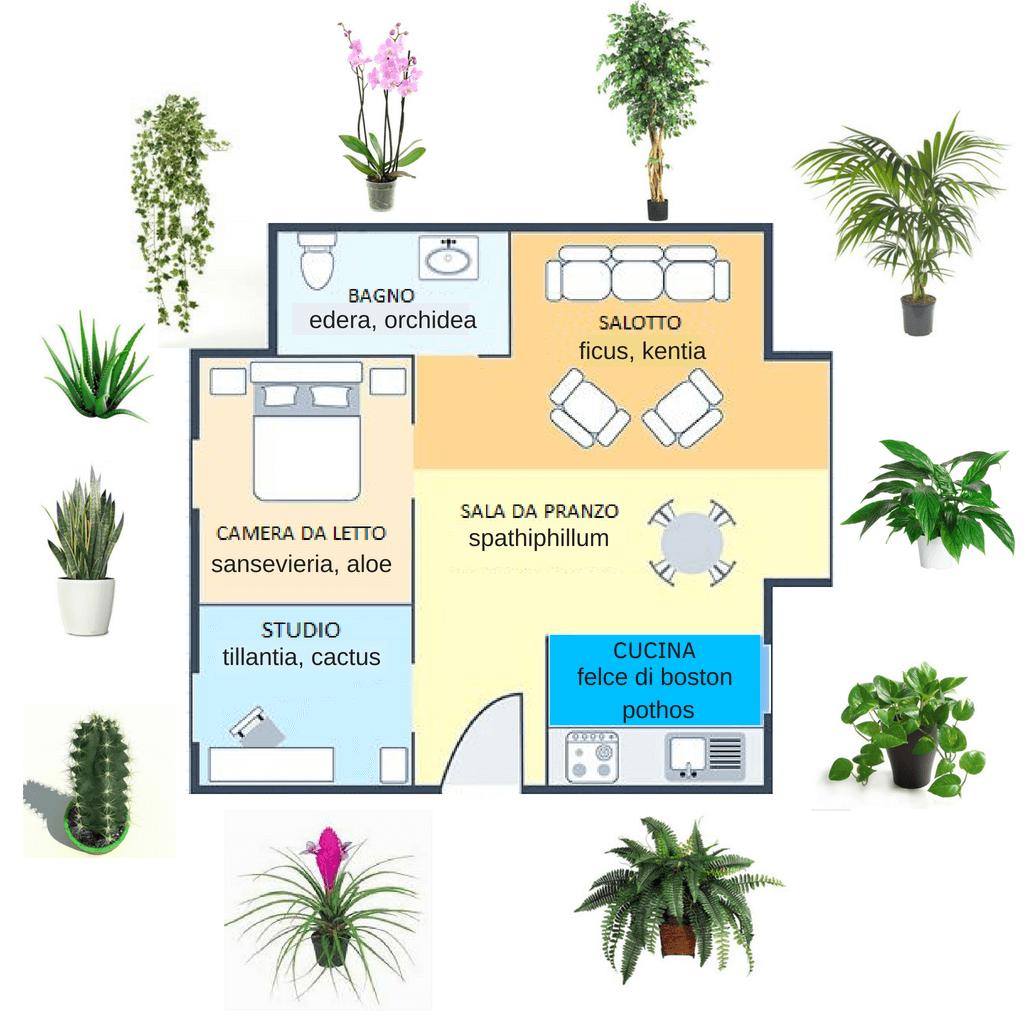 Ficus Benjamin Perde Foglie piante per la camera da letto e per tutta la casa: guida