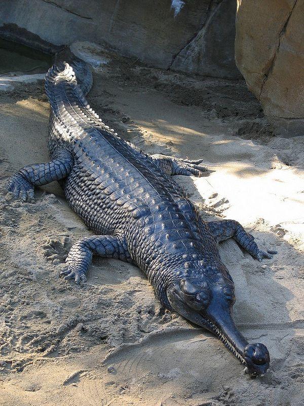 Animales raros peligro de extinción, miralo lince | Con optimismo ...