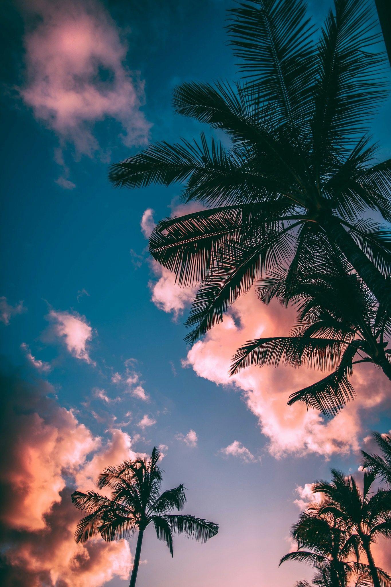 Wallpaper Pink Blue Sky Palmtree Clouds Backgrounds Phone Wallpapers Sunset Wallpaper Beautiful Nature Wallpaper Wallpaper palm trees on blue sky