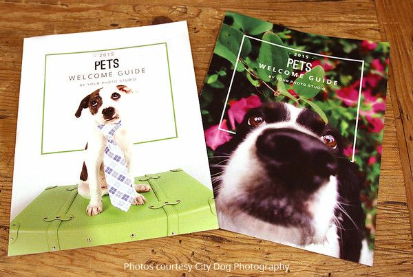 How to Get More Pet Photography Clients | Magazine Mama