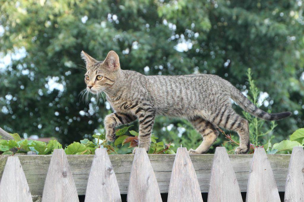 Kitten on fence kittens cats animals