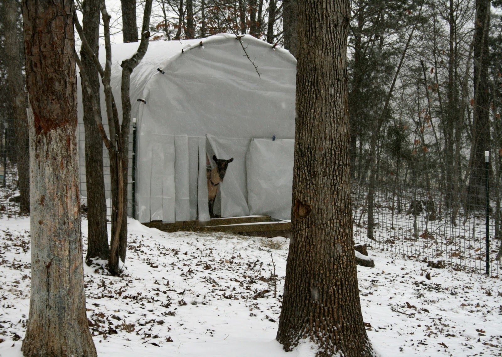 A Tiny Homestead: Cattle Panels used for cold weather shelters.
