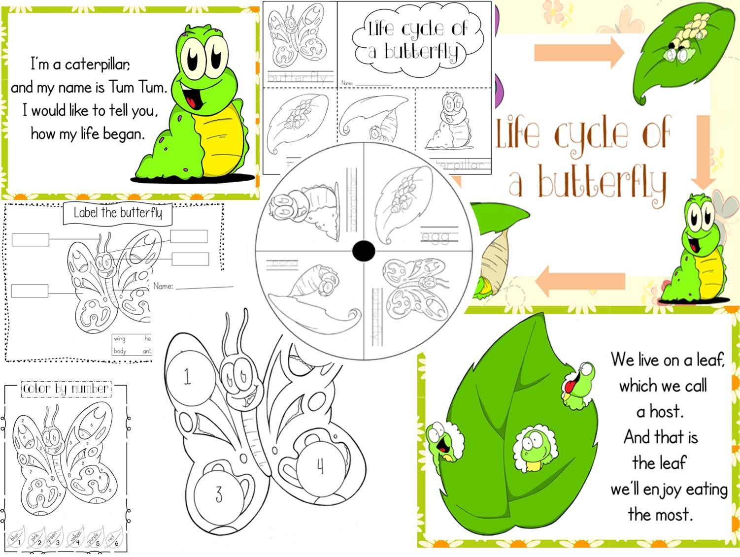 Life Cycle Of A Butterfly Pack Includes Everything From