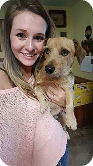 Everett Wa Dachshund Jack Russell Terrier Mix Meet Andre A