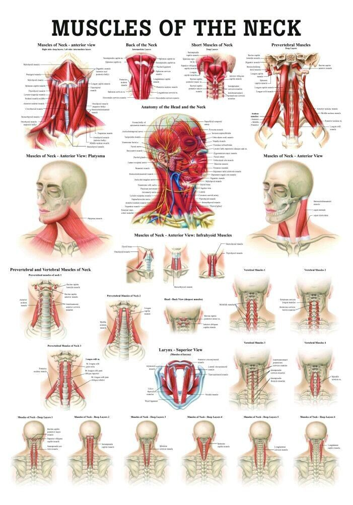Pin By Amanda Chizek On Fitness Health Pinterest Anatomy
