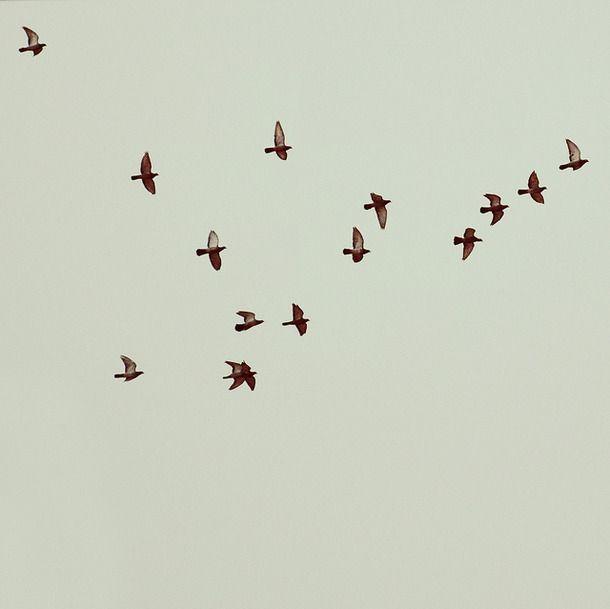 Birds Flying Free Quotes Birds Flying Birds Bird