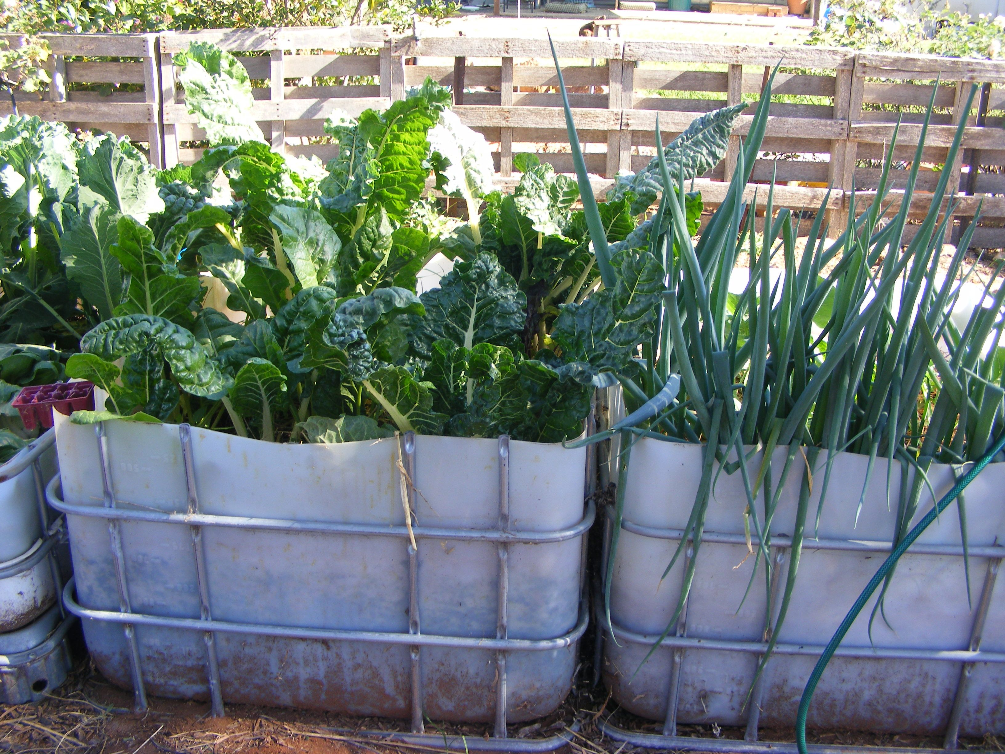 Raised Garden Beds Made From Ibc 1000ltr Containers Cut In