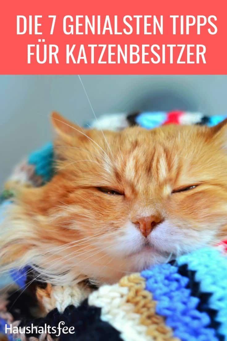 Katze In Der Wohnung Geruch Katzenhaare Hygiene Haushaltsfee Org